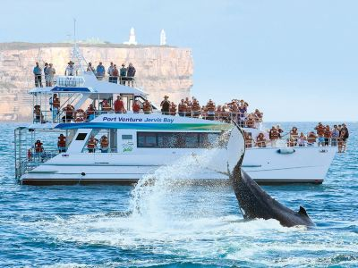 Dolphin Watch Cruises