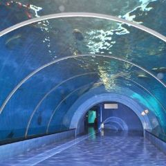 야룽완(아룡만) 해저세계(하이디스제) 여행 사진