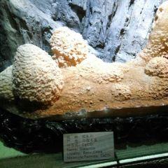 地質博物館用戶圖片