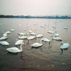 백조의 호수 여행 사진