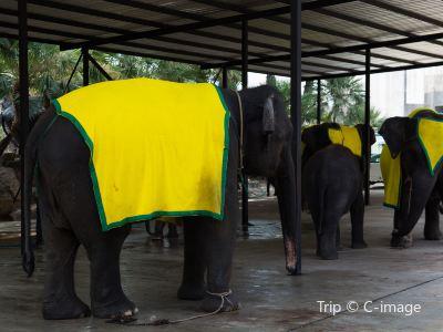 Siam Elephant Square