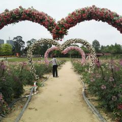 Yuntai Garden User Photo