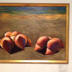 Art Gallery of Western Australia User Photo