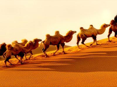 七星湖沙漠生態旅遊區