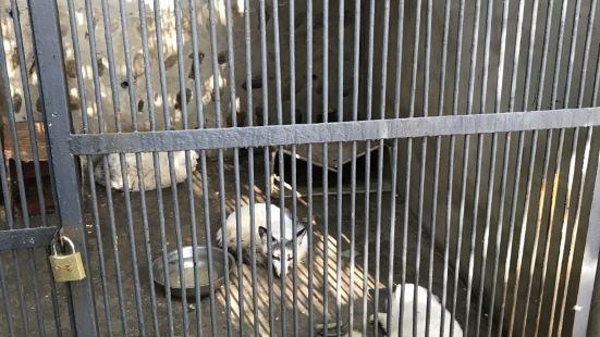 綿陽動物園