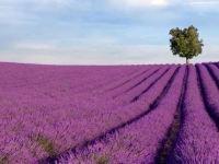 聞廷國際 | 端午過後,來看薰衣草可好?譜寫浪漫與夢幻的紫色國度!