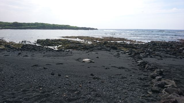 Punaluu Black Sand Beach