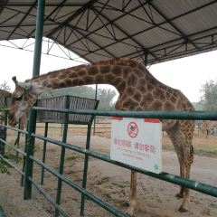 Qinhuangdao Wildlife Park User Photo
