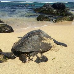 Ho'okipa Beach Park User Photo