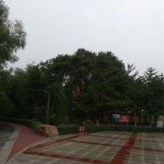 Shashan Park User Photo