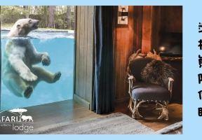體驗 | 與獅子老虎北極熊親密共眠,你敢嗎?