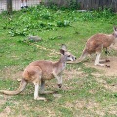 Pittsburgh Zoo & PPG Aquarium用戶圖片