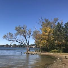 Wilcox Lake User Photo