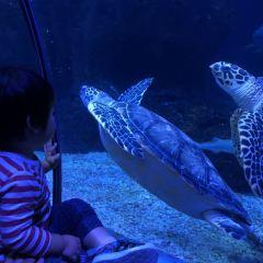 창펑(장풍) 해양세계(하이양스제) 여행 사진