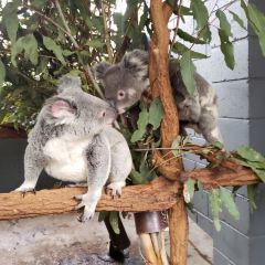 Lone Pine Koala Sanctuary User Photo