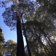 Mount Field National Park User Photo