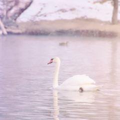 天鵝泉濕地公園用戶圖片