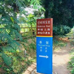 Mysterious Road (Dokkaebi Road) User Photo