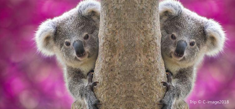 Adelaide Zoo1