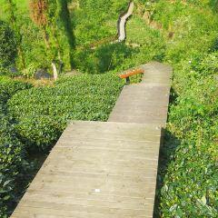 Guizhou Meitanxiang Shan Chabo Park User Photo