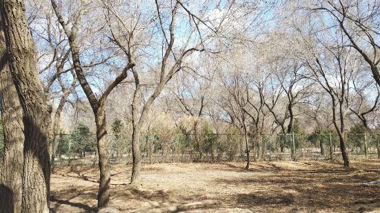 西拉木倫公園神奇洞
