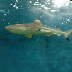 箱根園水族館用戶圖片