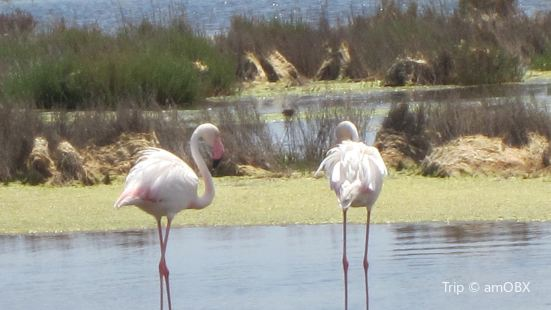 Molentargius - Saline Natural Park