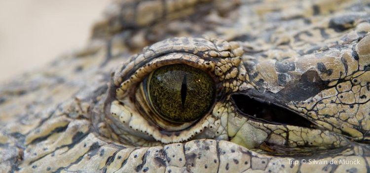 The Crocodile Ranch1