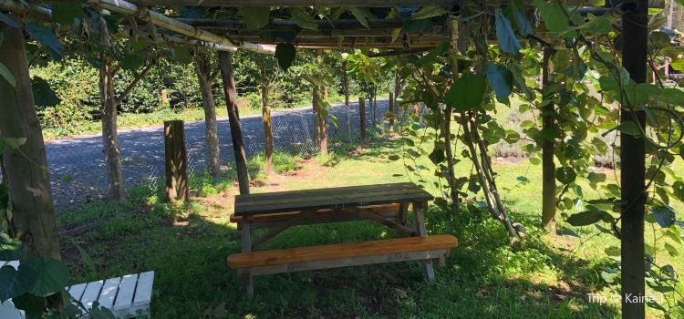 Lavender Backyard Garden1