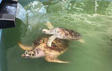 海龟保育中心-霹雳州-137****7766