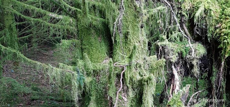 格裡澤戴爾森林2