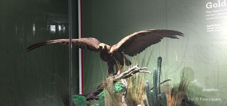 Museo de las Aves2