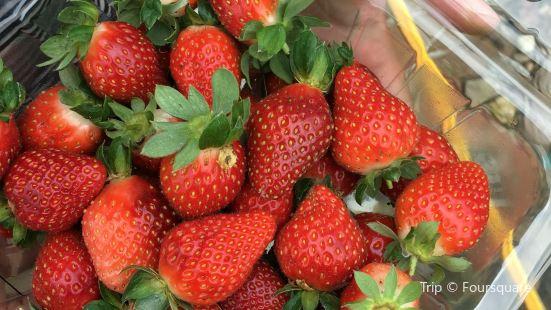 Kok Lim Strawberry Farm