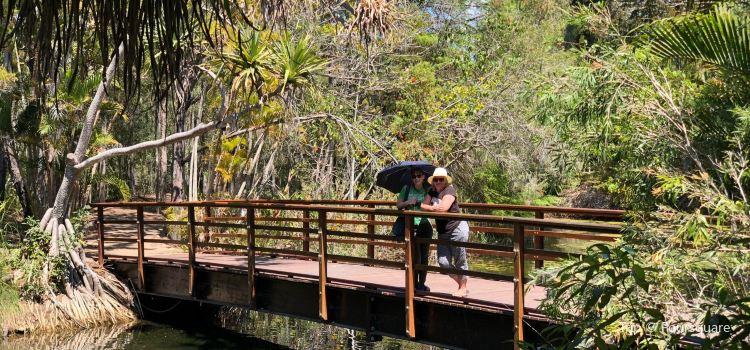 Hervey Bay Botanic Gardens3