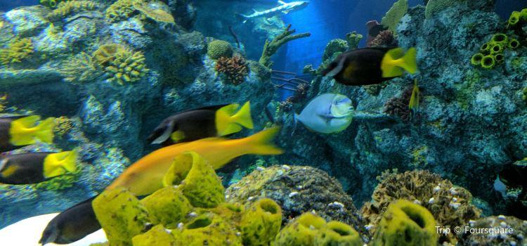 Bristol Aquarium3