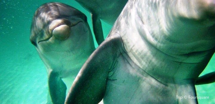 Dolphin Discovery Punta Cana3