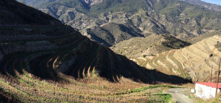 Tsiakkas Winery1