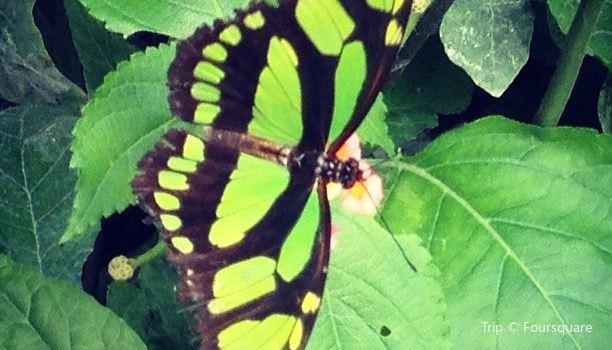 La Serre aux Papillons1