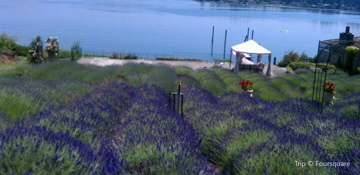 Purple Scent Lavender Farm | Tickets, Deals, Reviews, Family