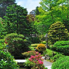 日本茶園用戶圖片
