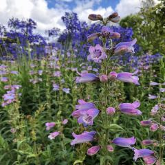 Merkinch Local Nature Reserve User Photo