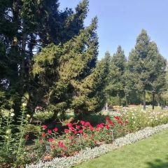 Rose Garden User Photo