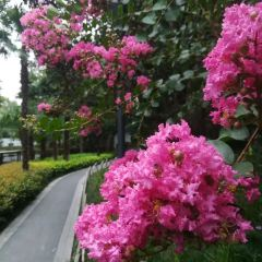 Miyamatoge Art Park User Photo