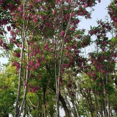 Feicui Park User Photo