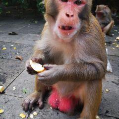 南灣猴島用戶圖片