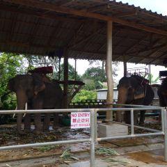 Kaibae Meechai Elephant Camp User Photo