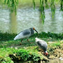 Crested Ibis Nature Reserve User Photo
