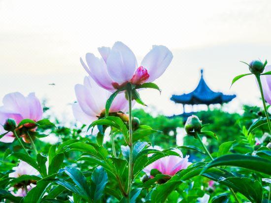 Yizheng