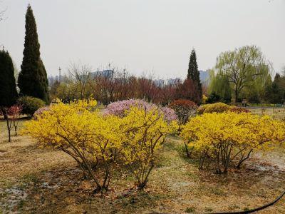 바오딩 식물원