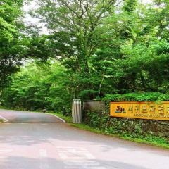 Seogwipo Natural Recreation Forest User Photo